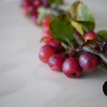 minimalist red berry photo by Andri Benson